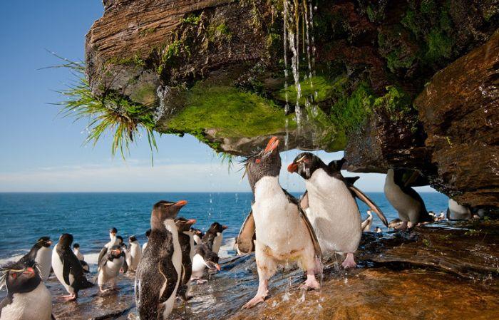 Penguins Take a Shower (6 pics)