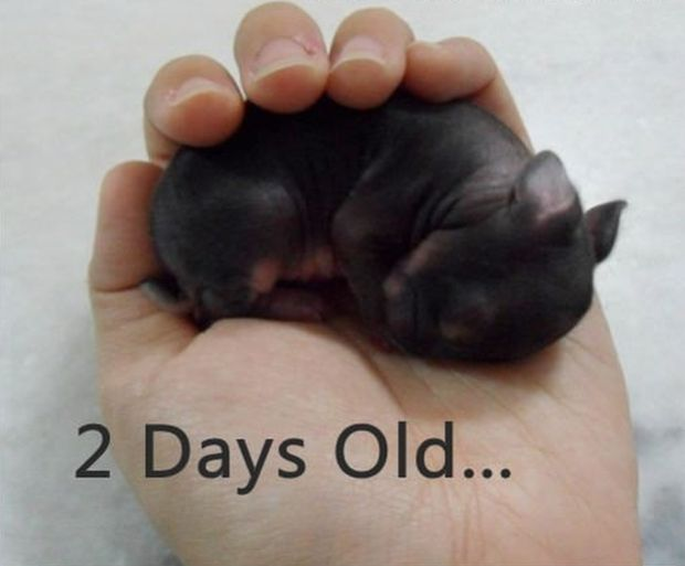 Just a Baby Bunny... (3 pics)