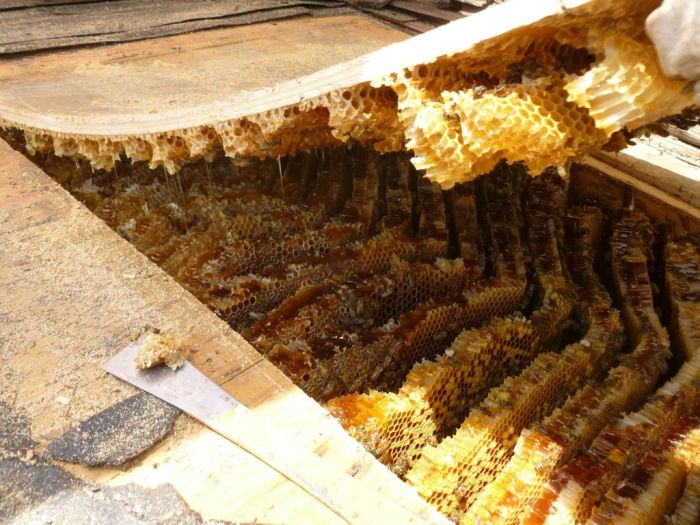 Bees in the Roof (6 pics)