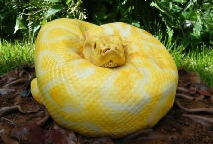 It's not a Real Snake. Wait, What? (5 pics)