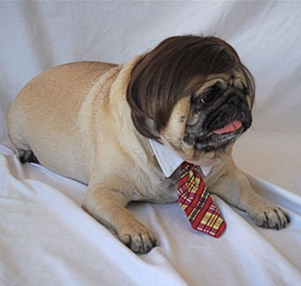 Dogs In Wigs (50 pics)