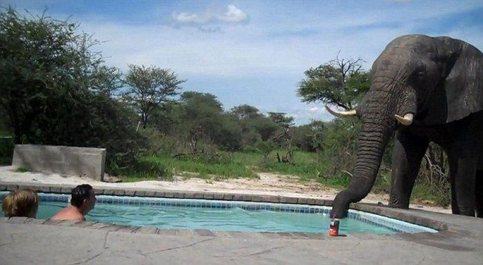 What Happens When You Build a Pool Somewhere in Africa (5 pics)
