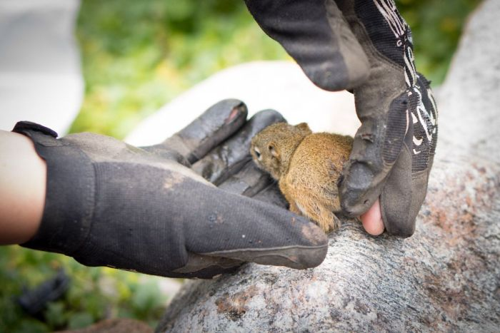 The Rescue of a Baby Squirell (12 pics)