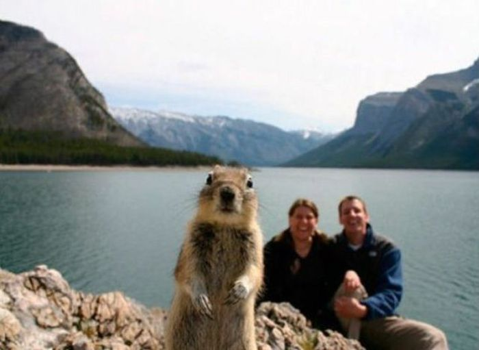 The Ultimate Animal Photobombs Collection (84 pics)