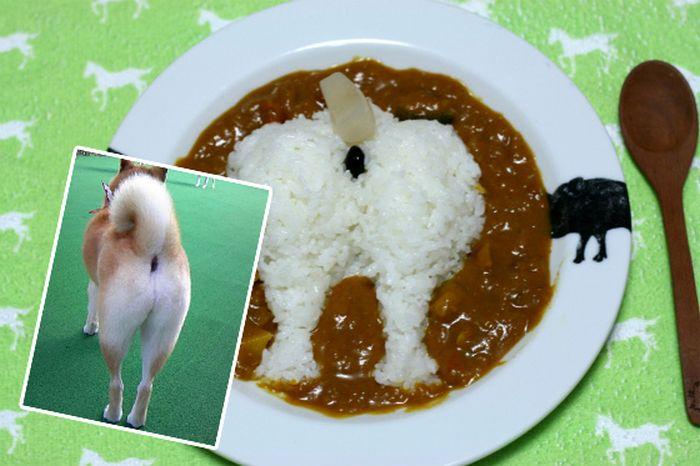 Shiba Inu Plump Booty Curry (6 pics)