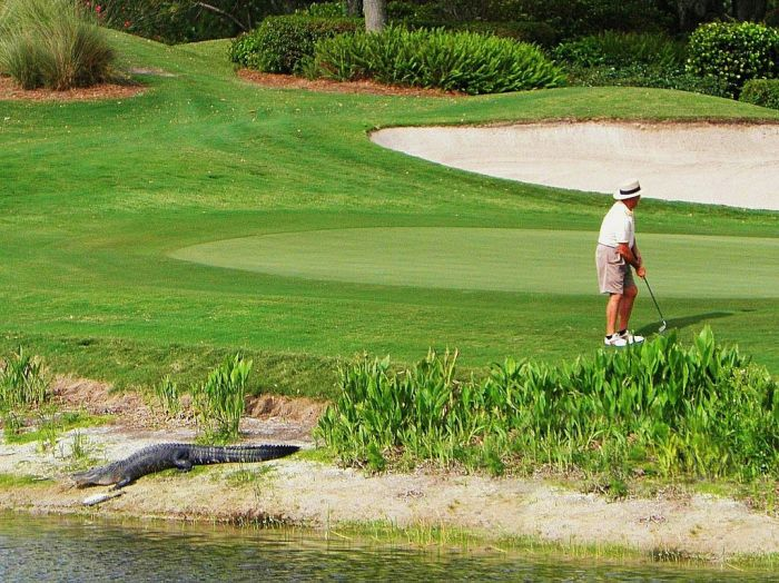 The Most Extreme Golf Field Ever (20 pics)