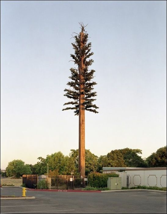 Camouflaged Cell Phone Towers (22 pics)