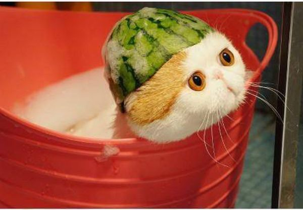 Cute Cat with Watermelon Hat (5 pics)