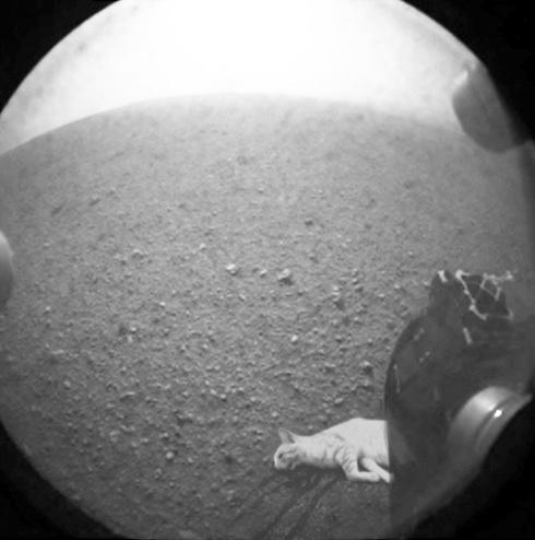 ¿Vida en Marte?: La NASA publica fotos de árboles en el pl