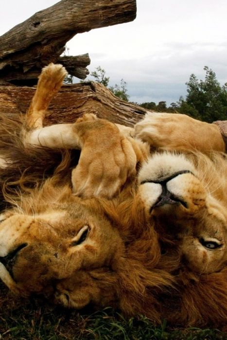 Amazing Animal Pictures (120 pics)