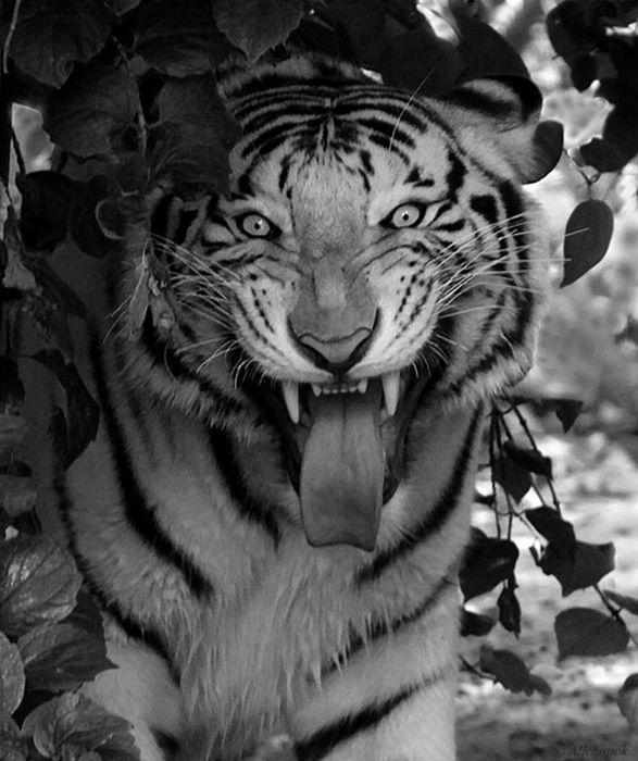 Amazing Animal Pictures (120 pics)
