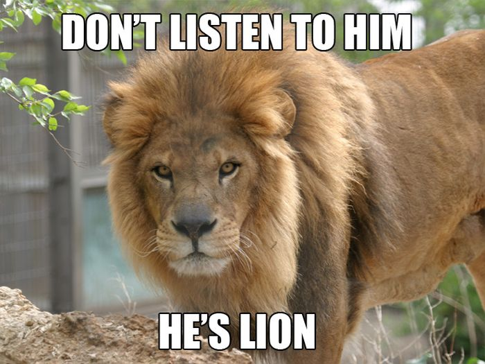Hilarious Animal Puns (10 pics)