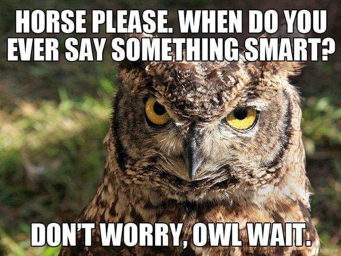 Hilarious Animal Puns (10 pics)