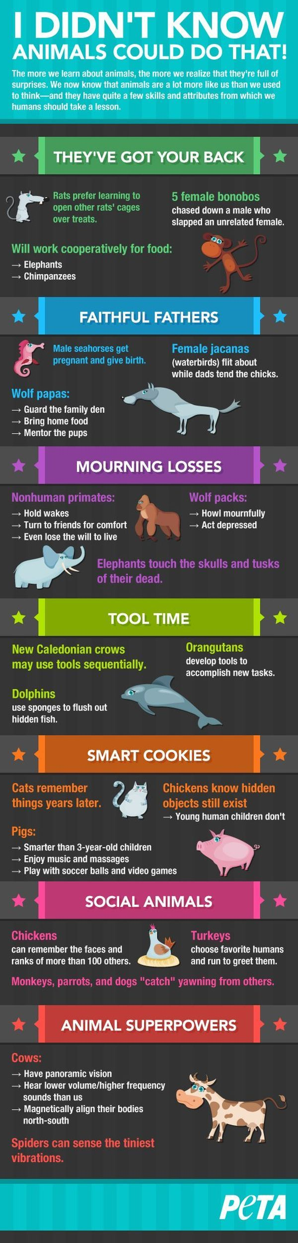 I Didn't Know Animals Could Do That! (infographic)