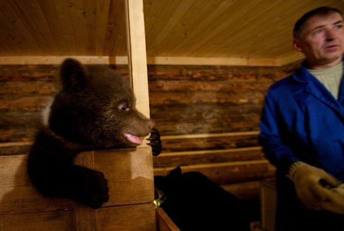 Russian Rescue Center for Bear Cubs (16 pics)