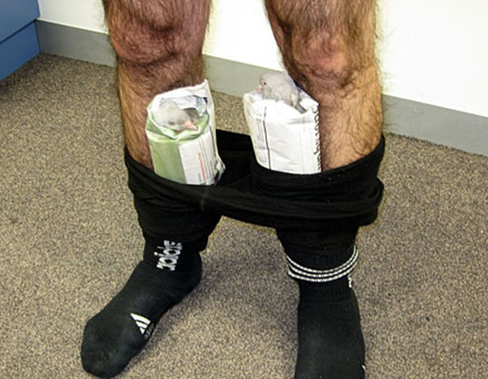 Weird Ways to Smuggle Drugs (43 pics)