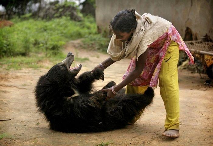 Pet Bear from India (6 pics)