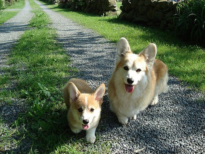 Animal Kids That Look Like Their Parents (35 pics)