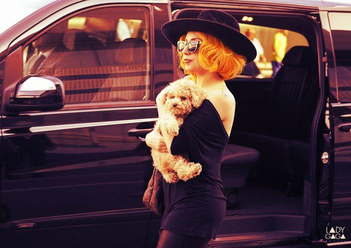Lady Gaga and Her New Dog Fozzi (25 pics)