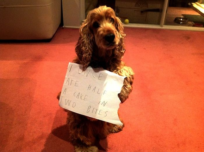 Dogs Being Shamed With Signs (89 pics)