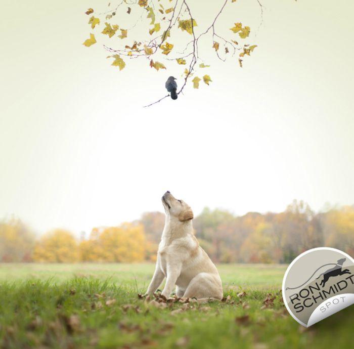 Amazing Dog Photos (20 pics)