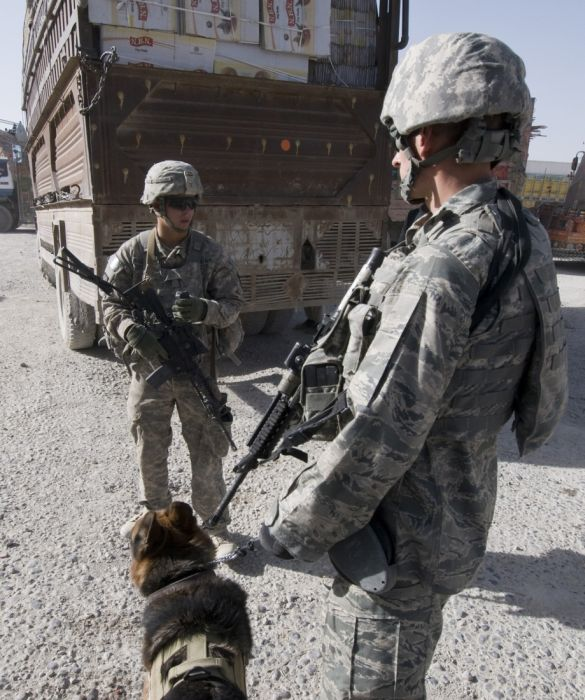 Dogs at War (69 pics)