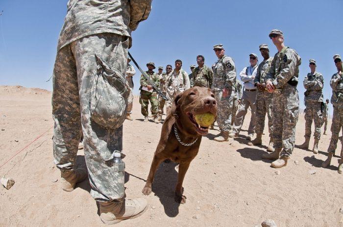 Dogs at War (69 pics)
