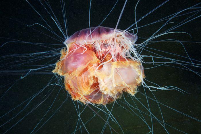 Life Under The Sea by Alexander Semenov (45 pics)