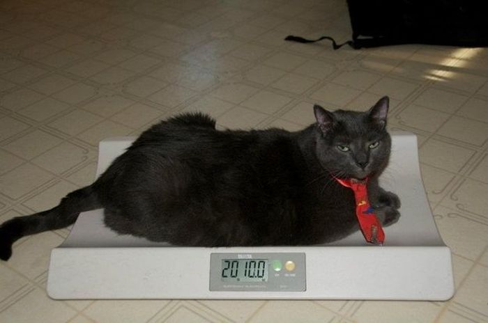 Amazing Cat Weight Loss Story (22 pics)
