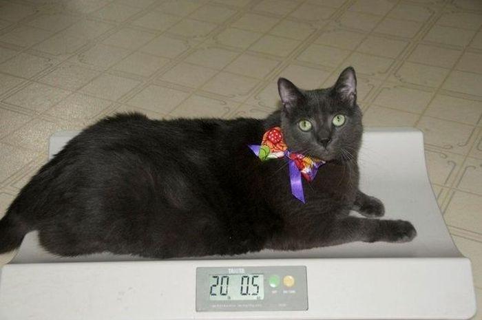 Amazing Cat Weight Loss Story (22 pics)