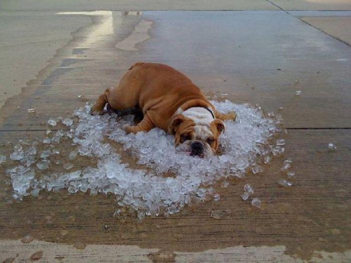 When Heat Comes (33 pics)