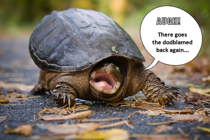 Grumpy Old... Turtles (12 pics)
