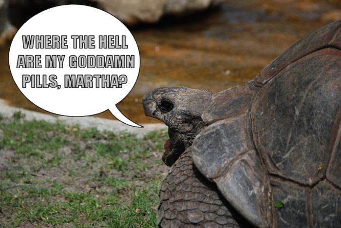 Grumpy Old... Turtles (12 pics)
