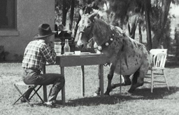 Awkward Vintage Photos Of Animals (30 pics)