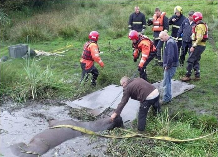 Horse Saved from a Deadly Muddy Pond (7 pics)