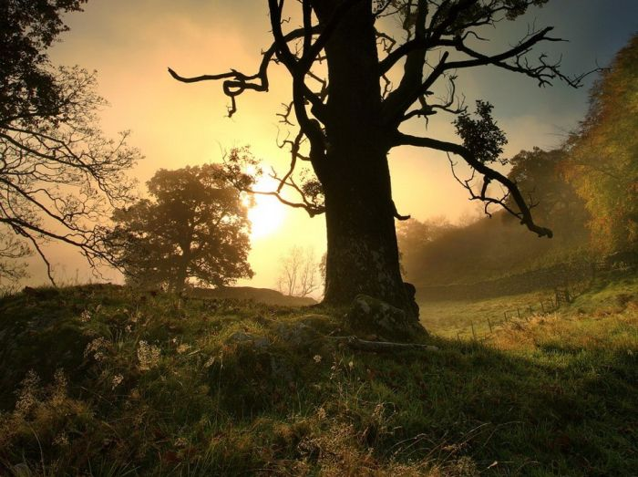 Beautiful Cheshire (31 pics)
