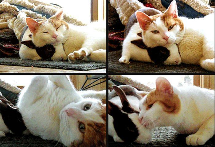 Cute Friends (4 gifs)