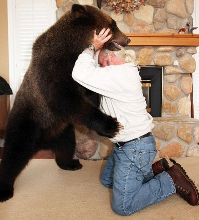Pet Grizzly Bear (19 pics)