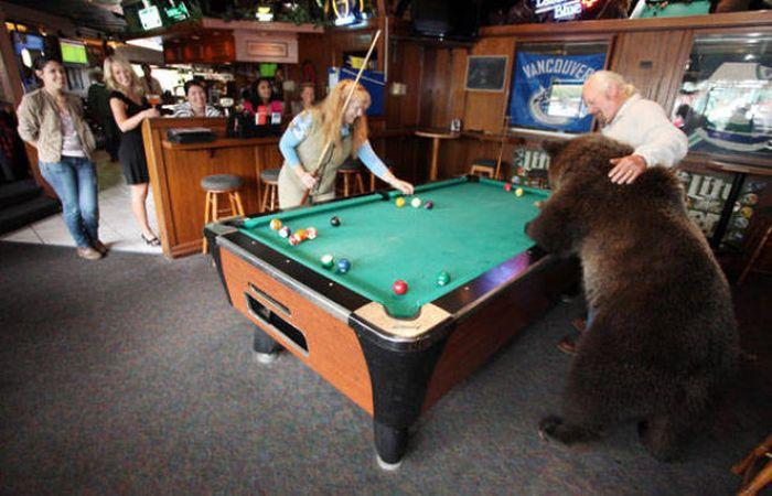 Pet Grizzly Bear (19 pics)