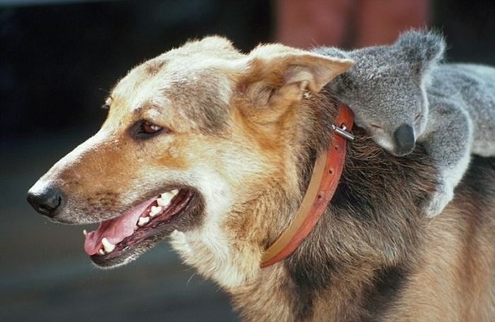 Animals Who Are Friends (25 pics)