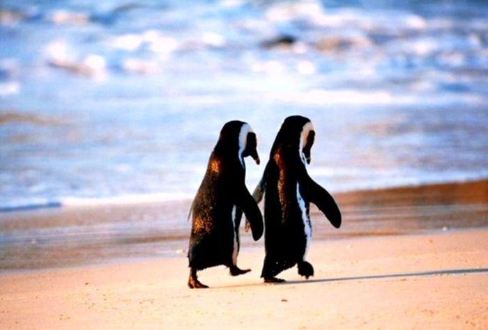 Animals Who Are Friends (25 pics)