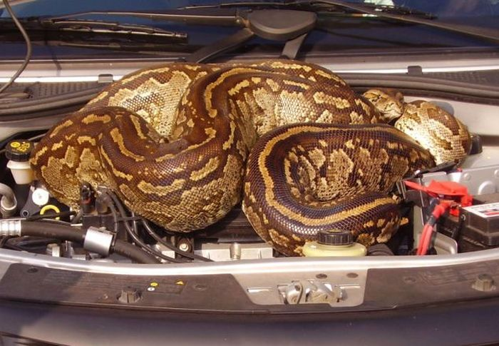 Look What I Have Found Under the Hood (5 pics)