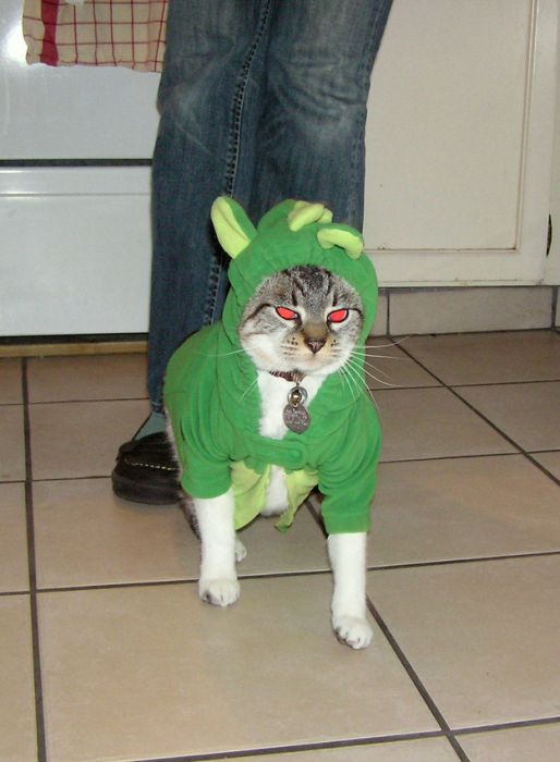Animals Dressed Up As Dinos (50 pics)