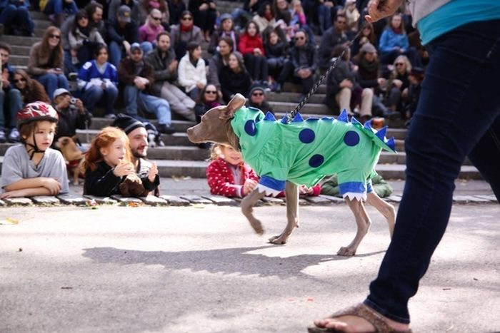 Animals Dressed Up As Dinos (50 pics)