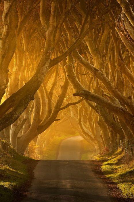 Beautiful Road in Ireland (16 pics)