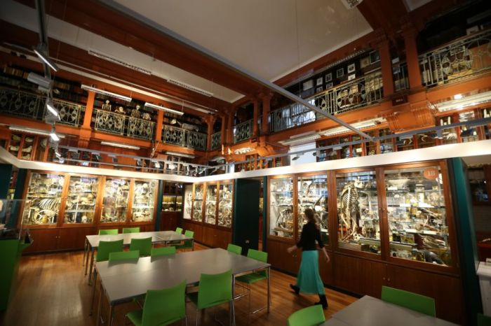 The Grant Museum of Zoology (38 pics)