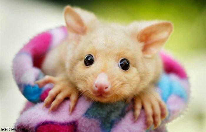 Cute Animals (40 pics)