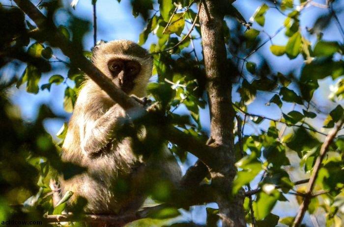 Beautiful Wildlife Photos (118 pics)