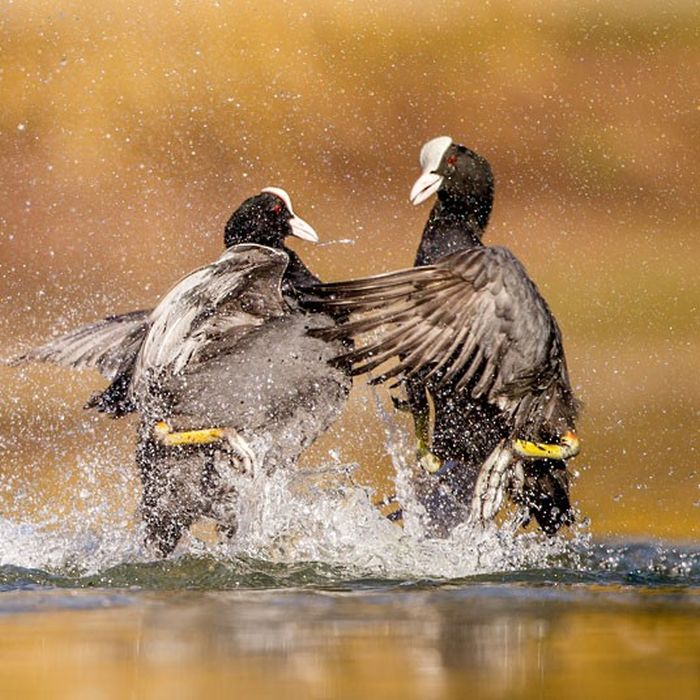 The Winners of British Wildlife Photography Awards 2012 (29 pics)
