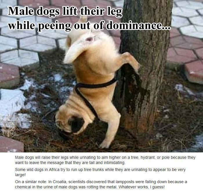 Unknown Dog Facts (10 pics)